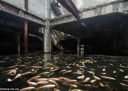 Peixes invadem shopping center abandonado na Tailândia