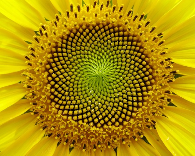 Perfect-Geometric-Patterns-In-Nature9__880[1]